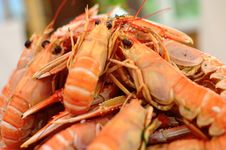Free Plate Of Crayfish Royalty Free Stock Photo - 26211875