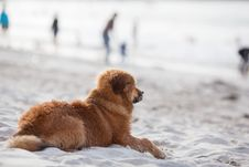Dog Lies On The Beach And Looks To The Sea Stock Photography