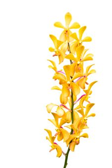 Free Yellow Orchid Flower Stock Photo - 26213470
