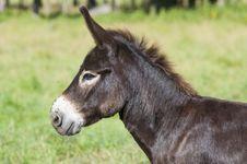 Free Donkey Stock Image - 26215351
