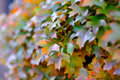 Free Autumn Leaves Stock Photo - 26222640