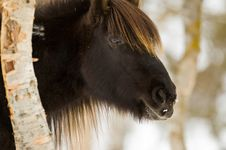Free Horse In Norway Stock Photography - 26222442