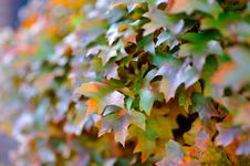 Free Autumn Leaves Stock Photo - 26222640