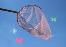 Free Butterfly Net Stock Photo - 26227890