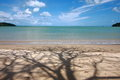 Free Shadow Tree And Beach Stock Photography - 26231152