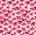 Free Seamless Background With Red Flower Royalty Free Stock Photos - 26238458