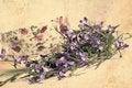 Free Beautiful Vintage Background With Lobelias Stock Photo - 26238600
