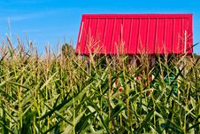 Free Red Roof In A Corn Field Stock Image - 26239431