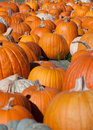 Free Pumpkin Patch Royalty Free Stock Photo - 26245545