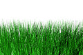 Free Meadow Grass Stock Photo - 26247790