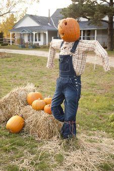 Free Halloween Pumpkin Scare Crow Stock Images - 26240294