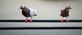 Free Pair Of Pigeons Stock Photography - 26250922