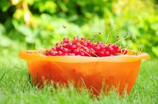 Free Bowl Of Redcurrant Stock Photography - 26250872