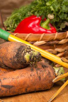 Free Fresh Harvested Carrots And Rake Royalty Free Stock Image - 26256906