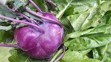 Free Purple Kohlrabi Stock Photography - 26259532