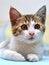 Free Cute Little Kitten Stock Photos - 26255183
