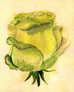 Free Yellow Rose Stock Photography - 26265902
