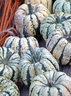 Free Striped Pumpkins Royalty Free Stock Photography - 26261117