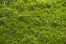 Free Moss On Stone Royalty Free Stock Photos - 26263088