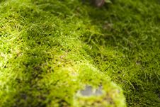 Free Moss On Stone Stock Photo - 26263200