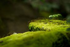 Free Moss On Stone Stock Photos - 26263983