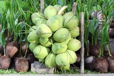 Free Coconuts Stock Image - 26265751
