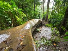 Free Rain Forest Royalty Free Stock Photo - 26267145