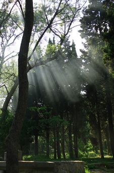 Free Sunbeams In Forest Stock Photo - 26268150