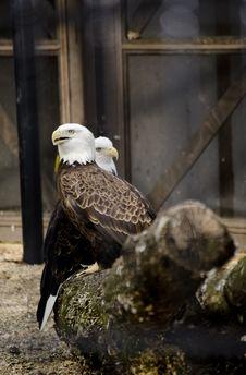 Free Eagles Stock Image - 26269241