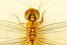 Free Dragonfly Royalty Free Stock Photo - 26269735
