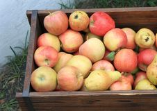 Free Harvest Of Ripe Apples And Pears Stock Photo - 26275190