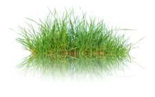 Free Close Up Spring Green Thick Grass Royalty Free Stock Photography - 26276117