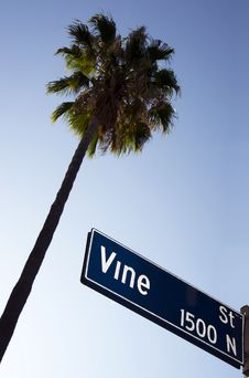 Free Palm Tree Vine Street Sign Hollywood California Royalty Free Stock Photo - 26276995