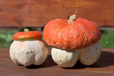 Free Fungoid Pumpkin Stock Photography - 26288022
