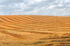 Free Harvest Swathing In A Prairie Field Royalty Free Stock Photos - 26292668