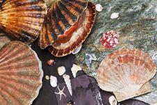 Free Various Seashells On Wet Stones Stock Image - 26293371