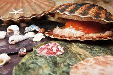 Free Various Seashells On Wet Stones Royalty Free Stock Photos - 26293398