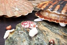 Free Alive Scallops On Wet Stones Stock Photography - 26293412