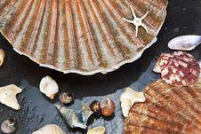 Free Sea Shells Background Stock Image - 26293471
