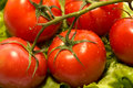 Free Tomatoes And Lettuce Stock Photography - 2634102