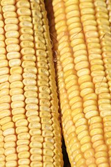 Free Corn Detail Royalty Free Stock Images - 2630099