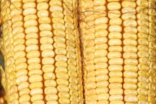 Free Corn Detail Royalty Free Stock Image - 2630136