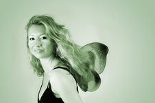 Free Little Butterfly Stock Images - 2631514