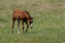 Free New Foal Stock Images - 2633954