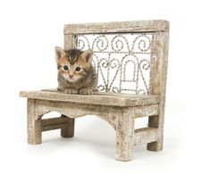 Kitten On A Bench Royalty Free Stock Photos