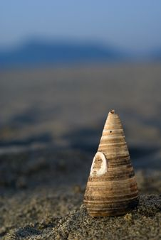 Free Shell In The Beach Stock Images - 2635034