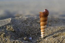 Free Shell In The Beach Royalty Free Stock Images - 2635089
