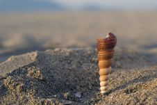 Free Shell In The Beach Royalty Free Stock Image - 2635106