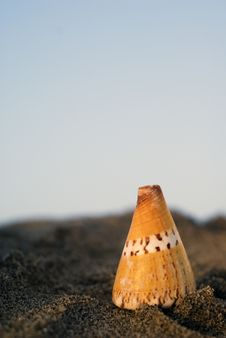 Free Shell In The Beach Stock Photography - 2635212