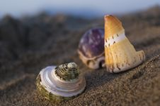 Free Shells Royalty Free Stock Image - 2635216